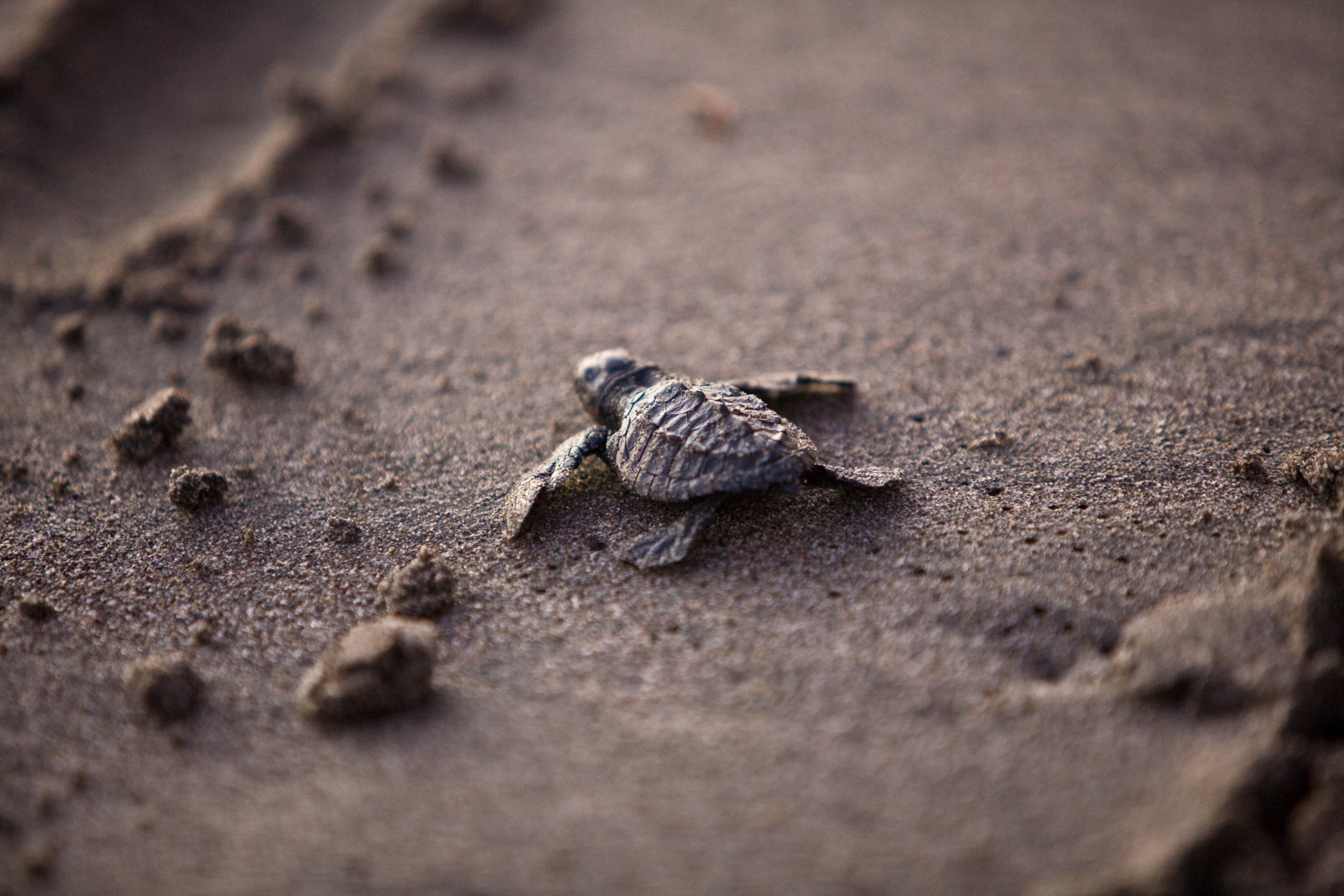 Baby Turtles Are Cool - photo#19